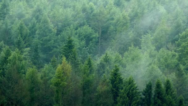 Pohybující se přes les Timelapse mlhy
