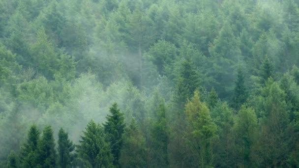 Mlha, stoupající z divočiny lesů
