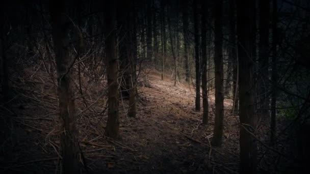 Walking Through Woods Towards Opening