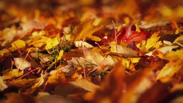 Passing Colorful Fall Leaves Macro