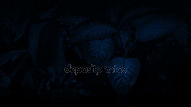 Dschungel Pflanzen am Fluss in der Nacht