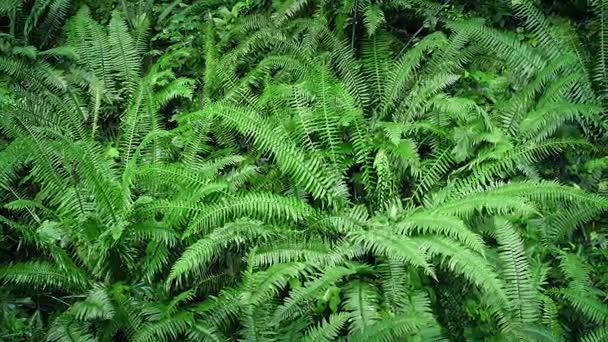 zelené kapradí Woodland