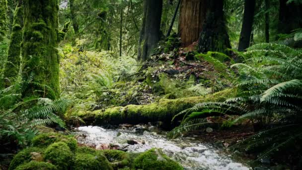 Fiume In mezzo al bosco