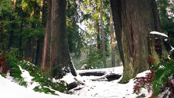 Lesní kapradí a stromy v husté sněžení