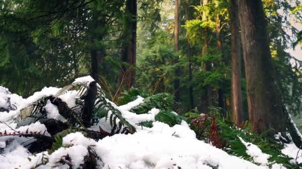Předávání kapradiny zapadlá ve sněhu v lese