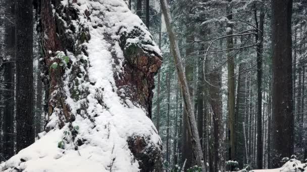 Havas téli erdő fa