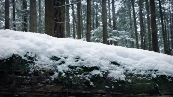 Passing Snow Covered Log In Forest