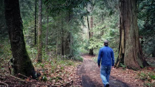 Muž chodí na polní cestě lesem