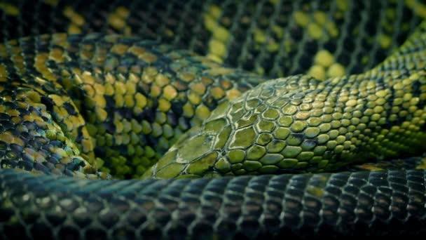 Had stočený dýchání pomalu