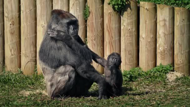 Gorila matka s dítětem v Zoo