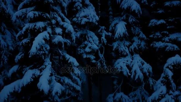 Pohybující se po zasněžené lesy v noci