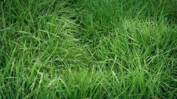 Přesun přes čerstvé mokré trávě