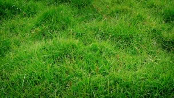 Přesun přes čerstvé zelené trávy