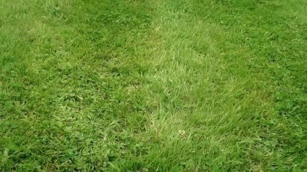 Bewegung über frisch gemähtes Gras