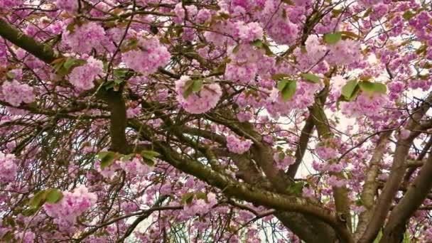 Růžový květ květy na stromě