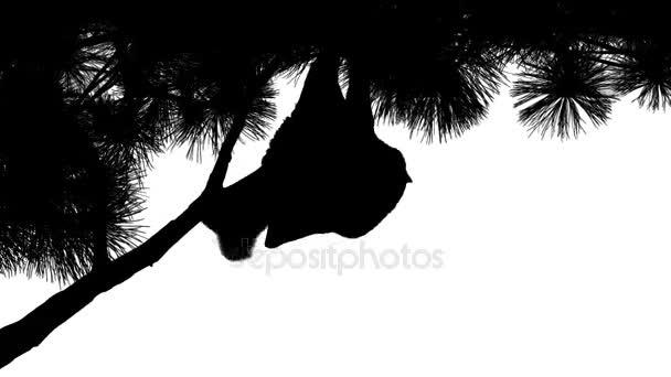 Fledermaus hängen von Zweig Silhouette