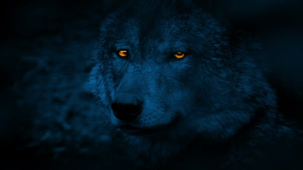 Wolf Side View With Glowing Eyes At Night