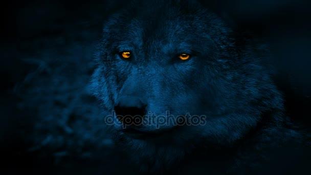Boční pohled s planoucíma očima v noci Wolf