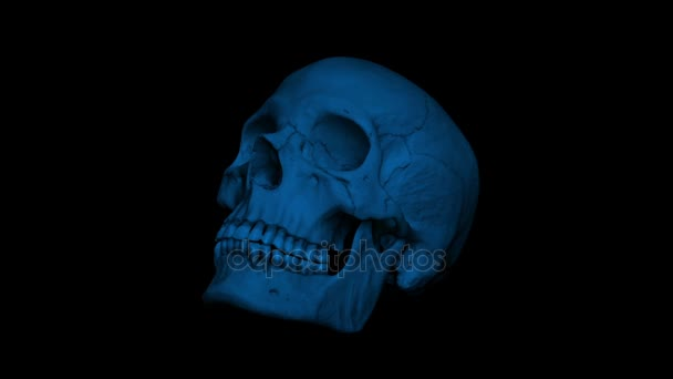 Totenkopf eines erwachsenen Menschen dreht sich in der dunklen Schleife