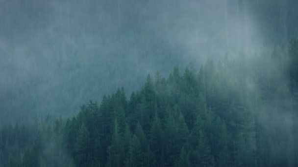 Wild Forest In Heavy Rainfall