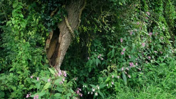 Old Hollowed Tree Among Plants And Flowers