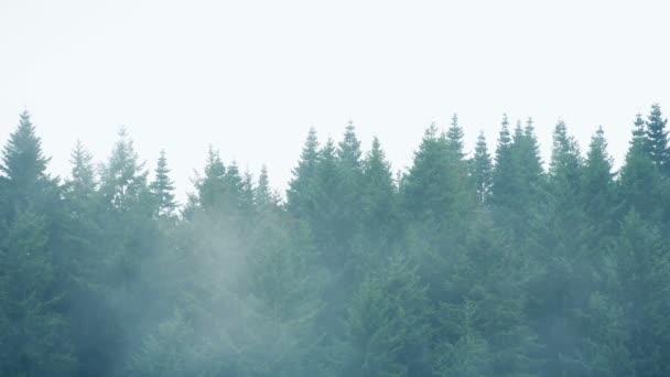 Mlha nad řadou stromů