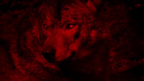 Wolf vrčí, krvavě červená abstrakt
