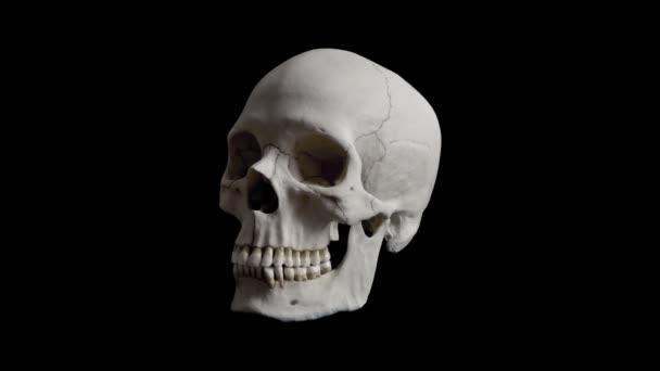 Menschlicher Schädel rotierenden Schleife