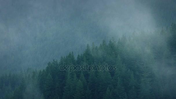 Nebel wälzt sich über den wilden Wald