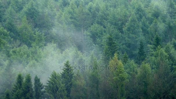 Déšť padá na Misty lesní krajina