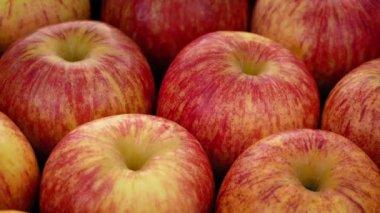 Apple Tree Stock Videos Royalty Free Apple Tree Footages