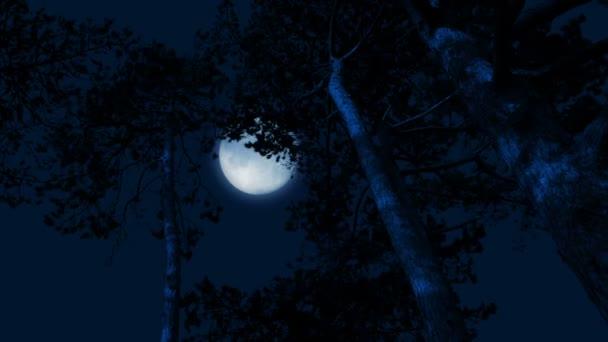 Měsíc na pozadí vysokých lesních stromů ve větru