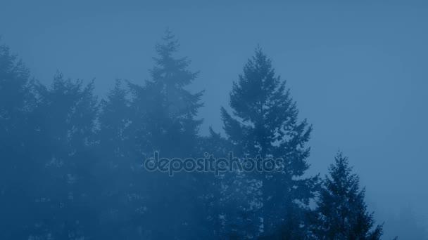 Velké lesní stromy na Misty večer