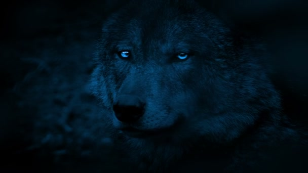 Wolf Side View With Bright Eyes In The Dark