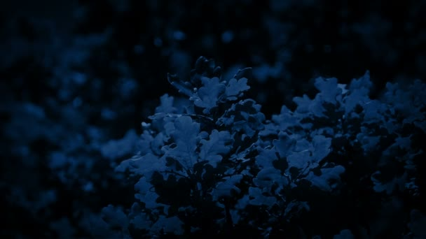 Oak Tree Branches At Night Closeup