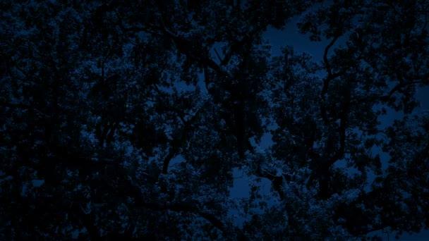 Dense Tree Branches At Night