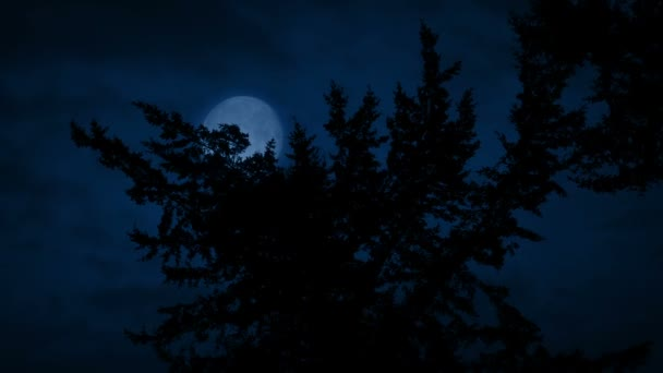 Tree Branches With Moon Behind