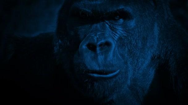 Gorilla Eating Closeup In The Dark