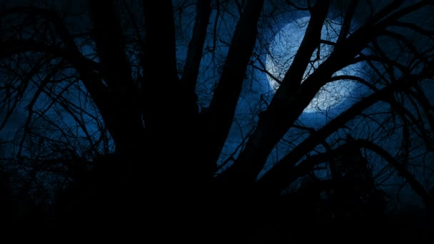Large Moon Behind Twisted Tree Branches