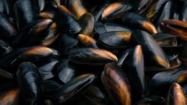 Muschelteller rotierende Nahaufnahme