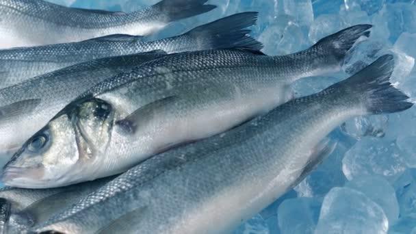 Čerstvé ryby chytat na ledě stěhování Shot