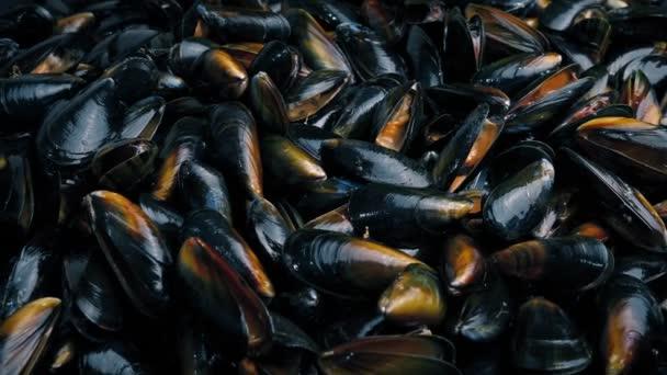 viele Muscheln Meeresfrüchte
