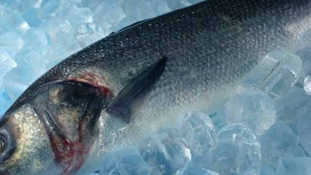 Trophy Fish On Ice