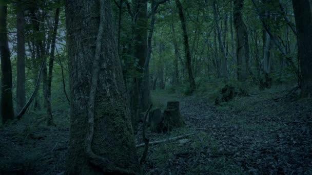 Prázdná lesní cesta ve večerních hodinách