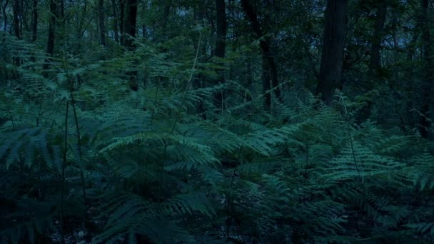 Woodland Ferns In The Evening Moving Shot
