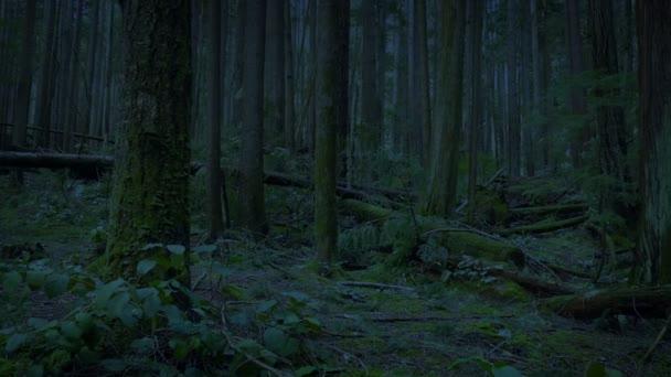 Késő este átkelni az erdőn