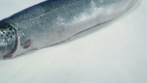 Haladó lazac Egész hal a jégen
