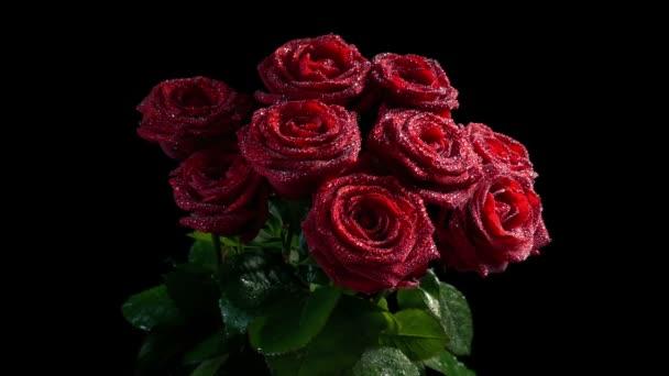 Červené růže se lesknou vodou