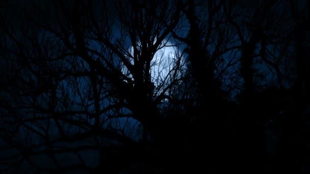 Měsíc svítí přes zarostlé staré stromy v lese