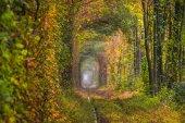 A régi elhagyott vasútvonal, a zöld fák sikátorban. Idegenforgalmi létesítmény. Település Rivne. Rivnenskaya régióban. Ukrajna.